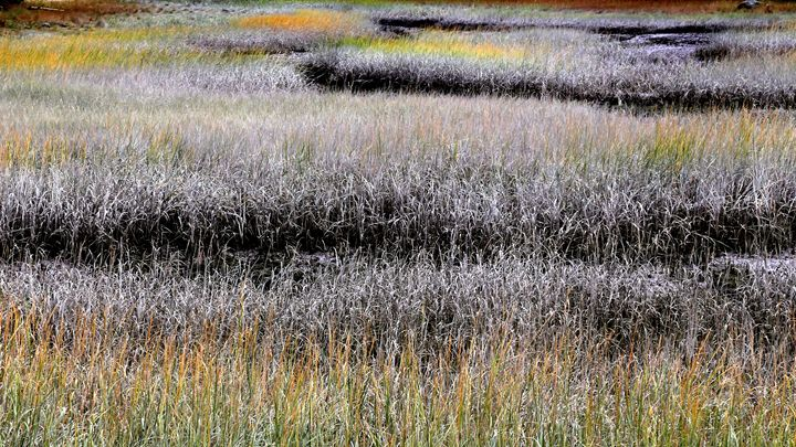 Fields of Color - Cantor Photography