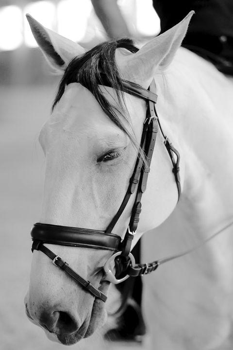 "Horse Portrait - ""Delirio"" II - Cantor Photography"