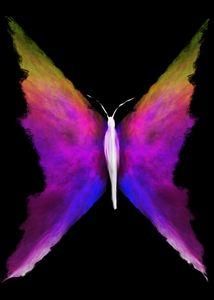 Wings of Wonder