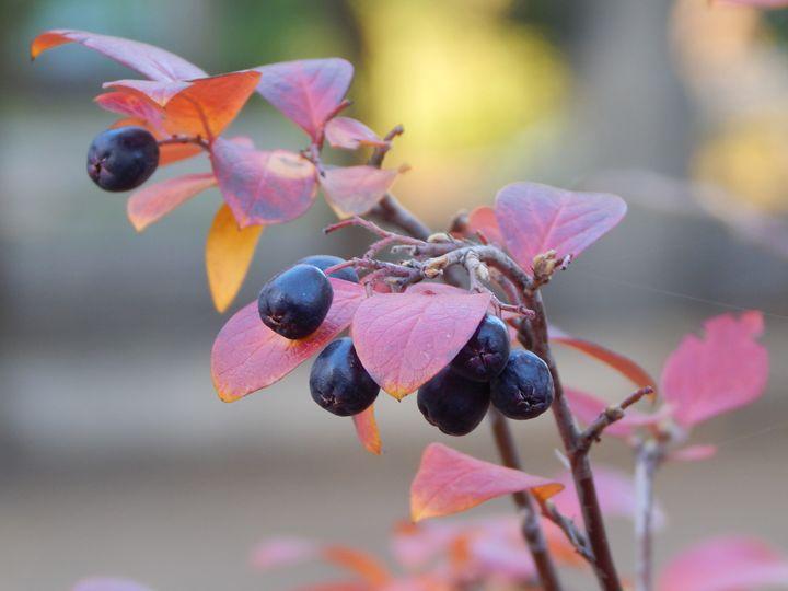 October - StrawBerry