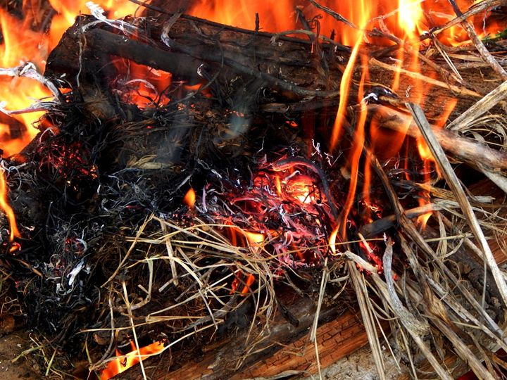 Bonfire - StrawBerry