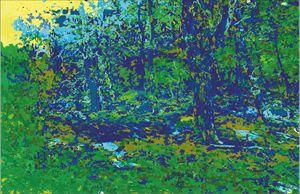dark pine forest - anatomkrk