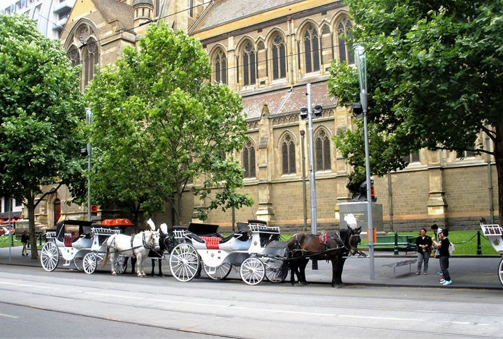 Melbourne Horse Drawn Carriages - Yolanda Caporn Art
