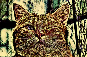Psycat