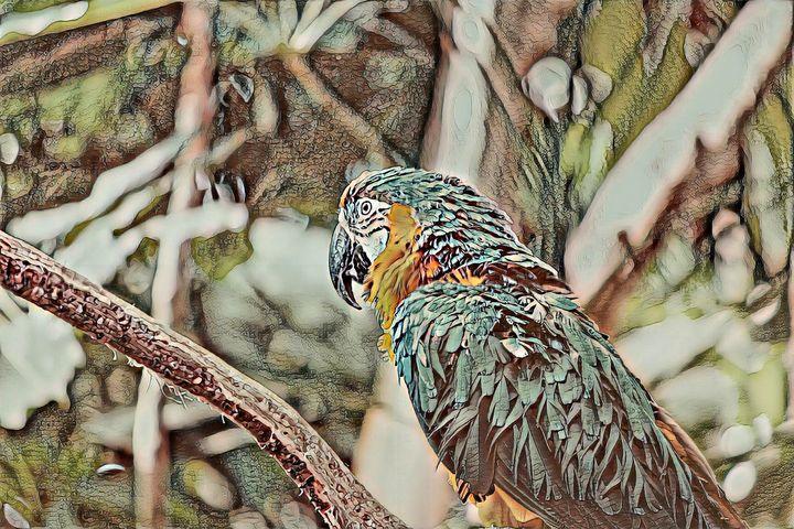 Parrot - Artnow