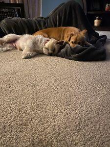 2 best friends. - JayLynns Art