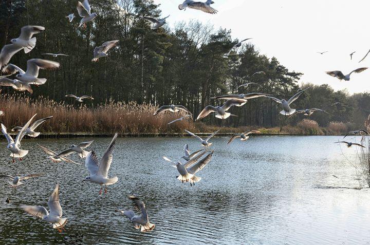 Flock of seagulls - Amanda's Imaginarium