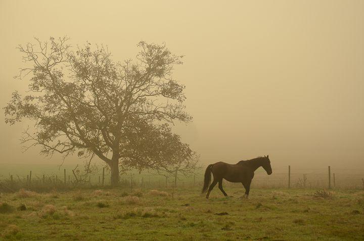 Horse in a foggy autumn landscape - Amanda's Imaginarium