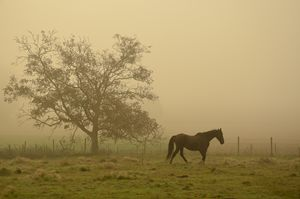 Horse in a foggy autumn landscape