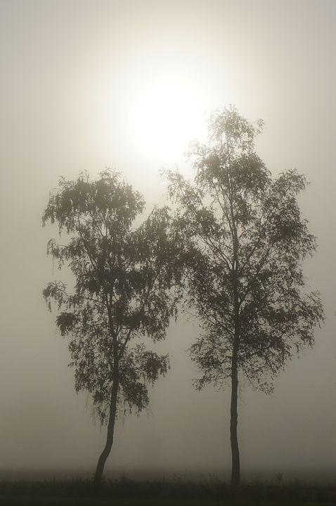Twin trees in the mist - Amanda's Imaginarium