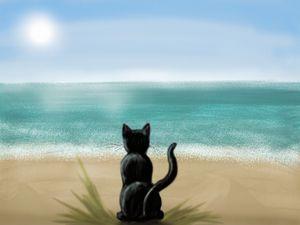 Black kitten staring across the wide