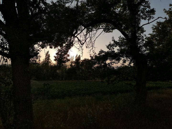 sunset and two trees - Naghmo