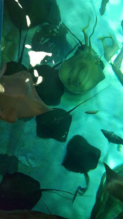 aquarium - Naghmo