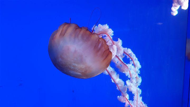 under the sea_2 - Naghmo