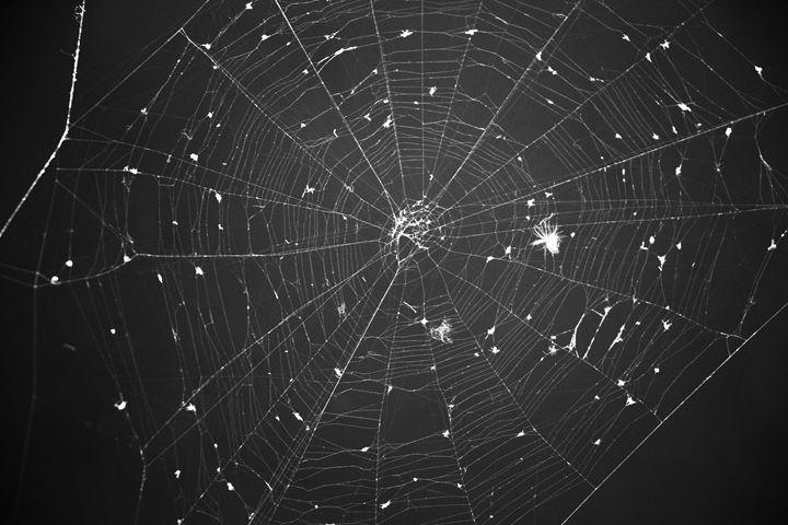 Night Sky Net - Jaroslaw Szadkowski