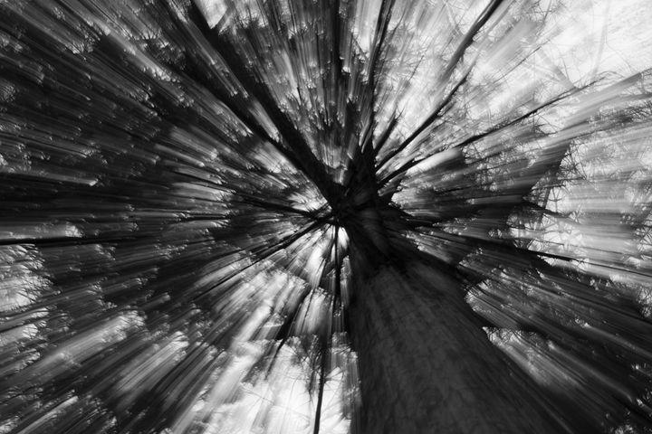 Gleam Tree - Jaroslaw Szadkowski