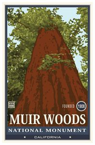 Muir Woods National Monument I