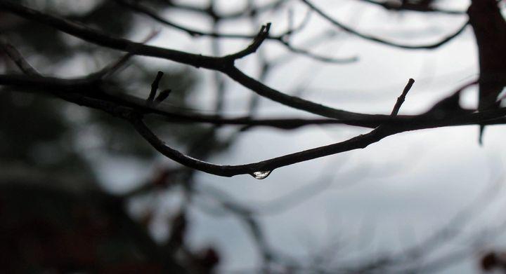 Tears of a Tree - Tiara L. Moran