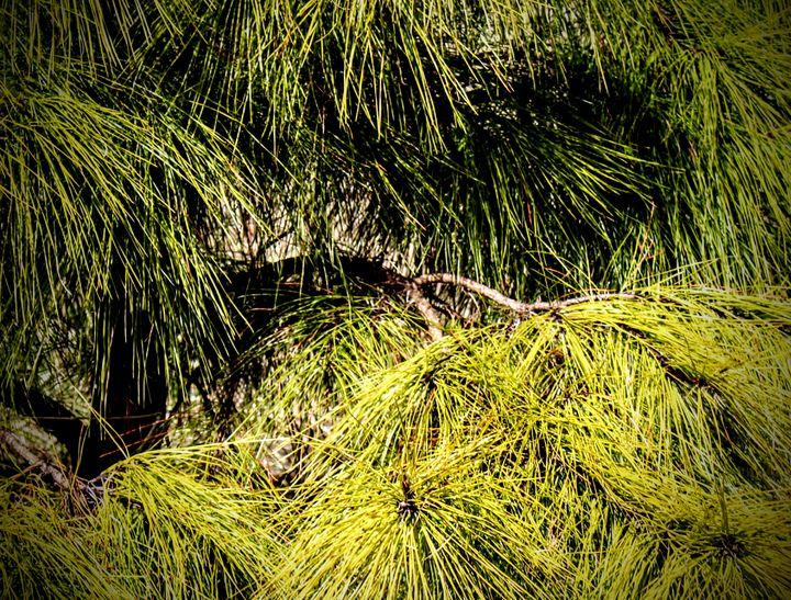 Prickly Pine - Tiara L. Moran