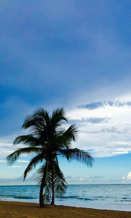Lone Palm - GARCAN