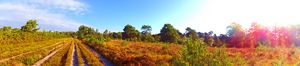 The path in Ashdown Forest