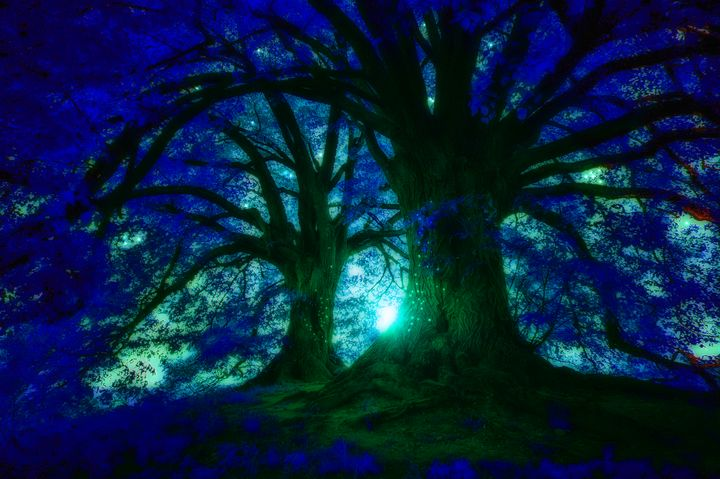 Fairy Lights - mimulux patricia no