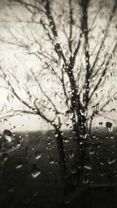somber rainfall