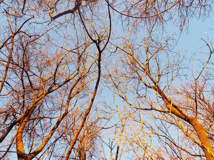 Golden Trees - Natasha R. Shacklett