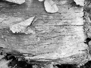 Wood and Leaves