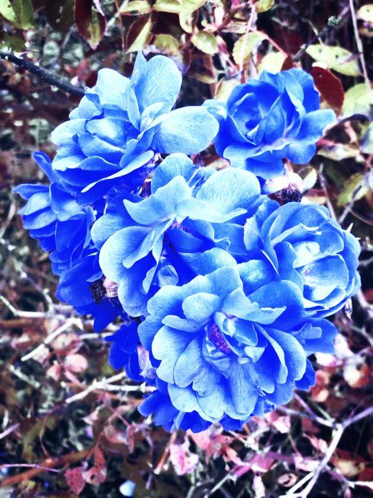Calm - Cozmiq Blu