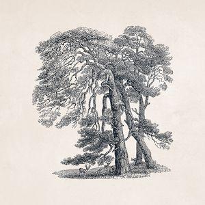 Tree Sketch #101 Ancient Elm Tree