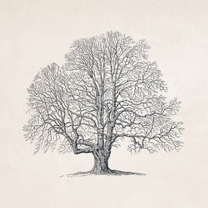 Tree Sketch #102 Autumn Oak