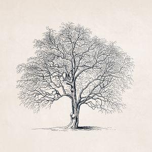 Tree Sketch #103 Autumn Tree