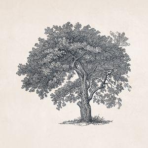 Tree Sketch #104 Spring Oak Tree