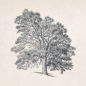 Tree Sketch #105 Hill Tree Drawing
