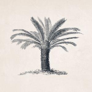 Tree Sketch #106 Sago Palm Tree