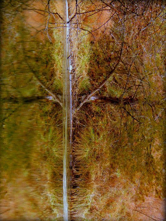 Wishbone - Chris Close Photography