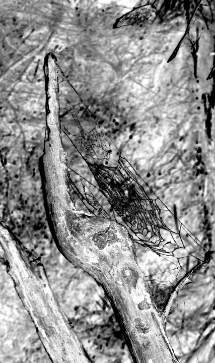 Web of Life - Chris Close Photography
