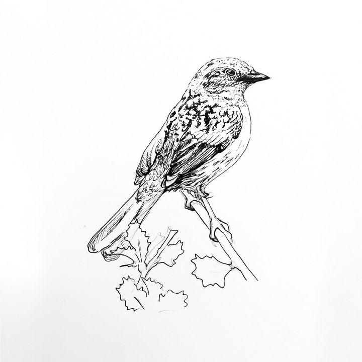 Dunnock Drawing - Drawings by Tara Lucy