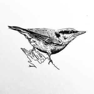 Nutfinch Drawing