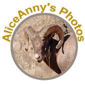 AliceAnny's Photos