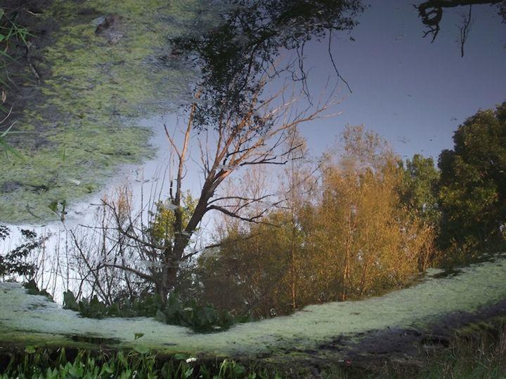 Fairmont Bridge I - Curtis H. Jones - Avalon Nature Photography