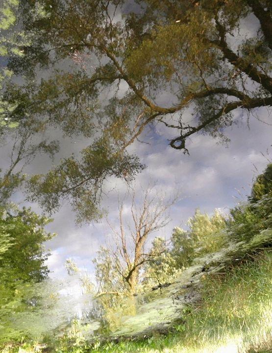 Fairmount Bridge IV - Curtis H. Jones - Avalon Nature Photography