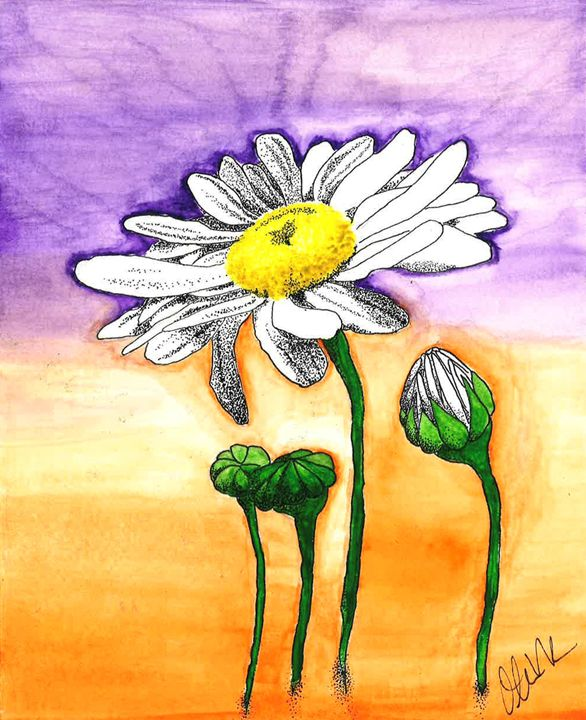 Daisies - Olivia R Williams