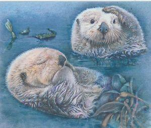 Otter Odyssey