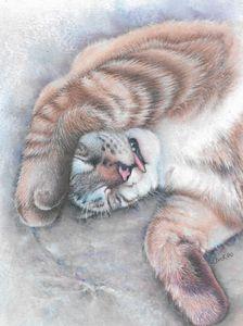 Cat Nap