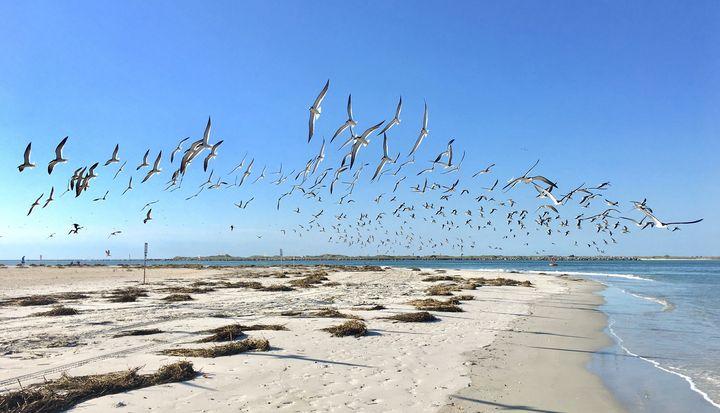 Nesting Season - Ehren Photography