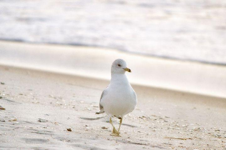 Early Bird - Ehren Photography