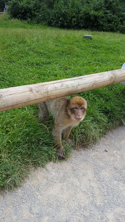 Monkey Forest - Danielle gregson
