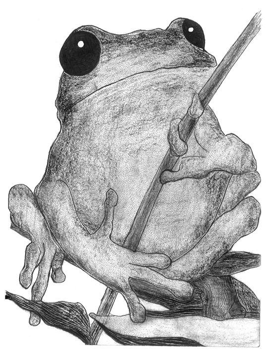 Contented Frog - Karu Design